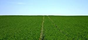 Bumerang Feld zum werfen